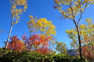 紅葉の焼山の写真素材 [FYI04602576]