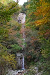 秋の色づいた紅葉に囲まれた三重県菰野町の庵座の滝の写真素材 [FYI04602715]