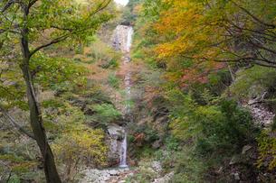 秋の色づいた紅葉に囲まれた三重県菰野町の庵座の滝の写真素材 [FYI04602717]