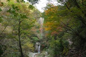秋の色づいた紅葉に囲まれた三重県菰野町の庵座の滝の写真素材 [FYI04602720]