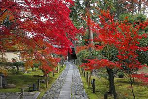11月 紅葉の鹿王院  -京都の秋-の写真素材 [FYI04602727]