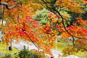 11月 紅葉の鹿王院  -京都の秋-の写真素材 [FYI04602741]