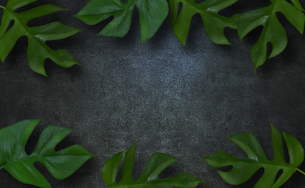 コンクリート背景とモンステラの植物フレームグラフィックスの写真素材 [FYI04602807]