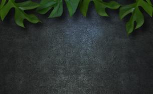コンクリート背景とモンステラの植物フレームグラフィックスの写真素材 [FYI04602808]
