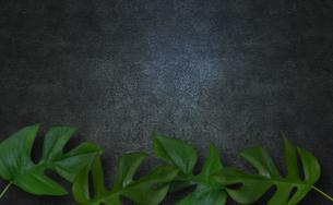 コンクリート背景とモンステラの植物フレームグラフィックスの写真素材 [FYI04602809]