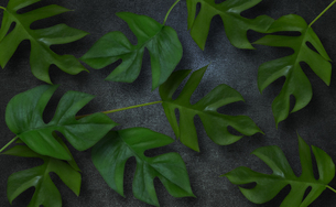 コンクリート背景とモンステラの植物フレームグラフィックスの写真素材 [FYI04602810]
