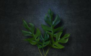 コンクリート背景とモンステラの植物フレームグラフィックスの写真素材 [FYI04602812]