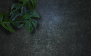 コンクリート背景とモンステラの植物フレームグラフィックスの写真素材 [FYI04602813]
