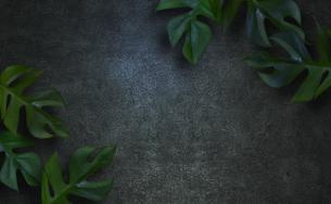 コンクリート背景とモンステラの植物フレームグラフィックスの写真素材 [FYI04602814]