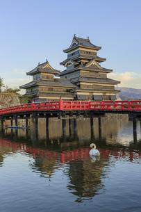 夕暮れの松本城と白鳥 長野県松本市の写真素材 [FYI04603099]