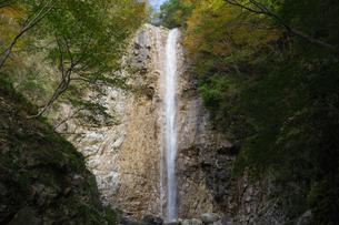 森の木々に囲まれた三重県菰野町の庵座の滝の写真素材 [FYI04603186]
