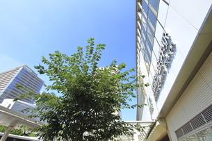 武蔵小金井駅南口の写真素材 [FYI04603381]