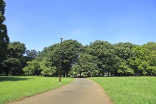 都立小金井公園の写真素材 [FYI04603412]
