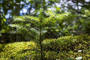 森に新しい木の芽の写真素材 [FYI04603621]
