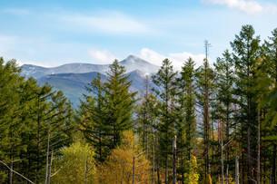初秋の林から見える山頂の写真素材 [FYI04604482]