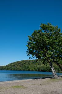青い静かな湖と湖畔の木の写真素材 [FYI04604491]
