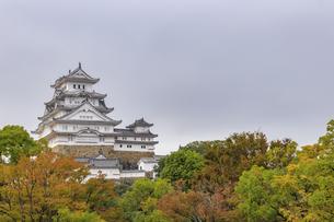 姫路城と紅葉 兵庫県姫路市の写真素材 [FYI04604571]