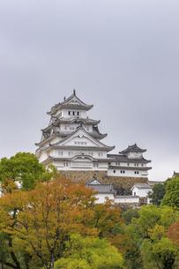 姫路城と紅葉 兵庫県姫路市の写真素材 [FYI04604572]