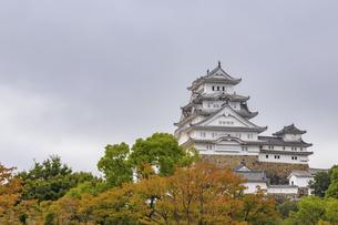 姫路城と紅葉 兵庫県姫路市の写真素材 [FYI04604573]
