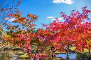 青空と紅葉 けいはんな記念公園の写真素材 [FYI04604722]
