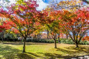 万博公園の紅葉の写真素材 [FYI04604726]