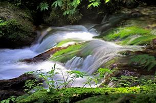豊富な湧水が流れる瓜割公園の夏の写真素材 [FYI04605088]