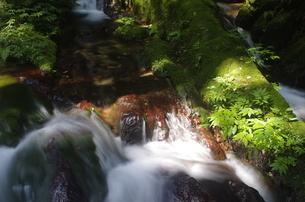 木洩れ陽が印象的な瓜割滝の流れの写真素材 [FYI04605094]
