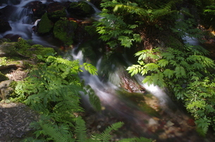 静寂な森の中、豊富な湧水が流れる瓜割公園の夏の写真素材 [FYI04605095]