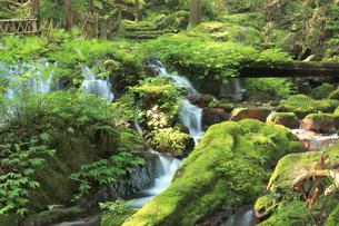 静寂な森の中、豊富な湧水が流れる瓜割公園の夏の写真素材 [FYI04605096]
