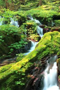 静寂な森の中、豊富な湧水が流れる瓜割公園の夏の写真素材 [FYI04605097]