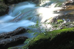 静寂な森の中、豊富な湧水が流れる瓜割滝の流れの写真素材 [FYI04605098]