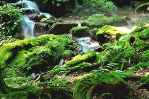 静寂な森の中を流れる豊富な湧水が流れる瓜割公園の夏の写真素材 [FYI04605099]