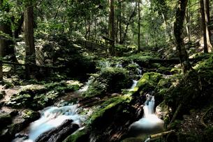森の緑と豊富な湧水が流れる瓜割滝公園の夏の写真素材 [FYI04605100]