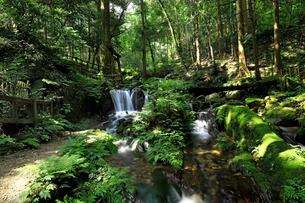 森の緑と豊富な湧水が流れる瓜割滝公園の夏の写真素材 [FYI04605101]
