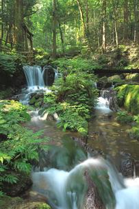 静寂な森の中を流れる豊富な湧水が流れる瓜割公園の夏の写真素材 [FYI04605102]