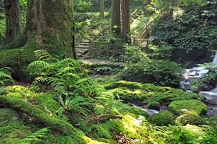 苔むした緑が美しい瓜割の滝公園の写真素材 [FYI04605105]