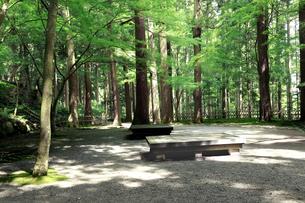 木立の風が涼しい瓜割の滝公園の朝の写真素材 [FYI04605106]