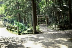 木立に囲まれた鳥居のある参道の写真素材 [FYI04605109]