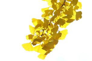 黄葉の写真素材 [FYI04605131]