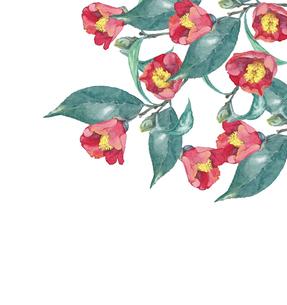 椿の水彩画のイラスト素材 [FYI04605176]