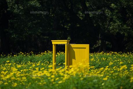 どこでもドアとお花畑の写真素材 [FYI04605288]
