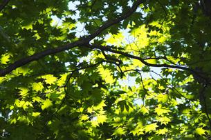 木漏れ日の写真素材 [FYI04605389]
