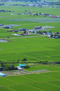 東川町の水田地帯の写真素材 [FYI04605414]