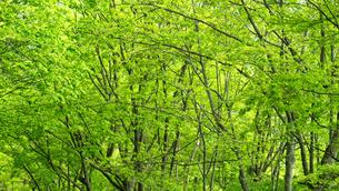 初夏の森の写真素材 [FYI04605416]