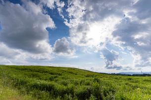 霧ヶ峰高原の景色の写真素材 [FYI04605514]
