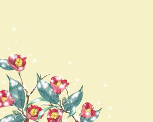 雪が積もった椿の花のイラスト素材 [FYI04605586]