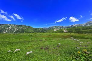 夏の立山 天狗平より剣岳などの山々の写真素材 [FYI04606079]