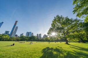 ミッドタウンマンハッタンの摩天楼から射す夕日に照らされる生い茂る新緑とセントラルパークの芝生の広場 シープメドウで寛ぐ人々の写真素材 [FYI04606146]