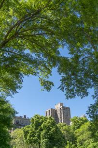 セントラルパークに生い茂る新緑の木々の後ろに見えるセントラルパークウエストの高級住宅街の写真素材 [FYI04606177]