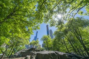 セントラルパークに生い茂る新緑の木々の後ろにそびえ立つミッドタウンマンハッタンの摩天楼を照らす太陽の写真素材 [FYI04606178]